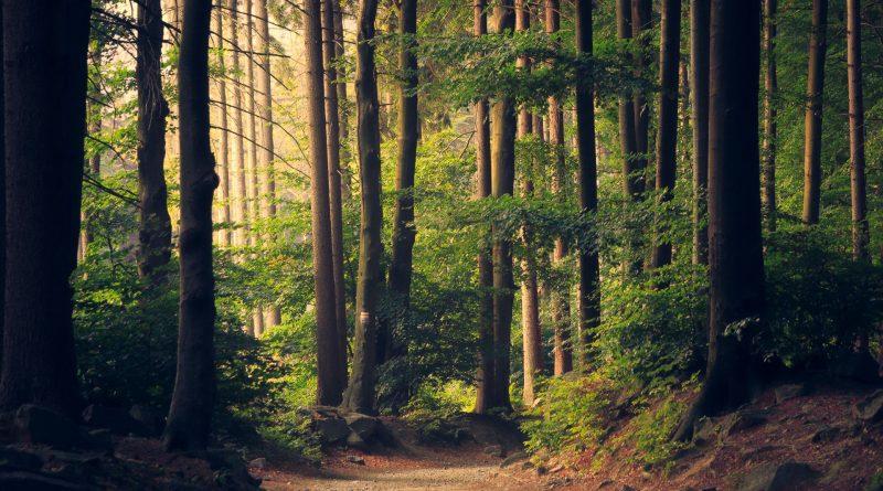 Skovinvestering